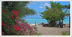 Firefly Beach Cottages - Negril Jamaica
